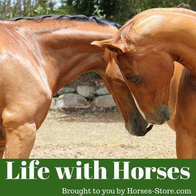 Cover art for 020 - Life With Horses - how to dismount with style and preparation for your summer riding  lessons