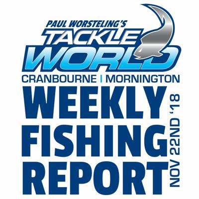 Cover art for Weekly Fishing Report November 22nd 2018 - Tackle World Cranbourne & Mornington