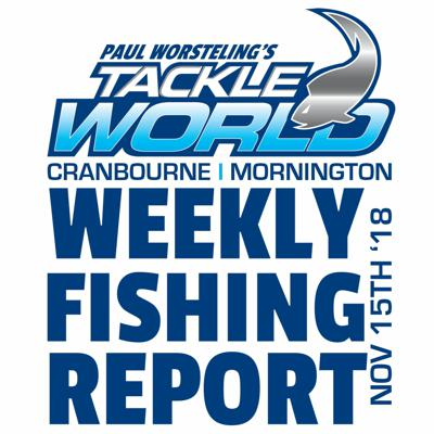 Cover art for Weekly Fishing Report November 15th 2018 - Tackle World Cranbourne & Mornington