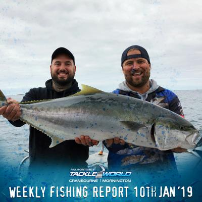 Cover art for Weekly Fishing Report January 10th 2019 - Tackle World Cranbourne & Mornington