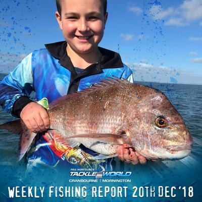 Cover art for Weekly Fishing Report December 20th 2018 - Tackle World Cranbourne & Mornington