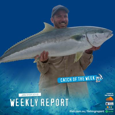 Cover art for Weekly Fishing Report January 31st 2019 - Tackle World Cranbourne & Mornington