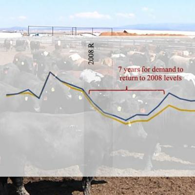 Cover art for Recession impacts on cattle markets