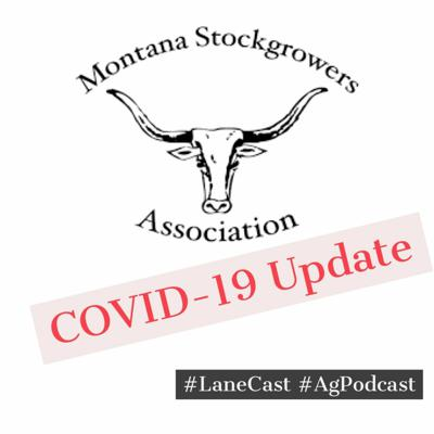 Cover art for MT Stockgrowers COVID-19 Update