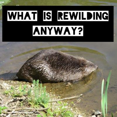 What is Rewilding Anyway?