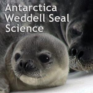 Weddell Seal Science