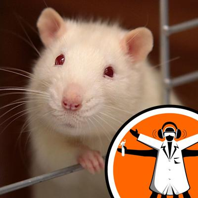 Cover art for Mini human livers transplanted into rats