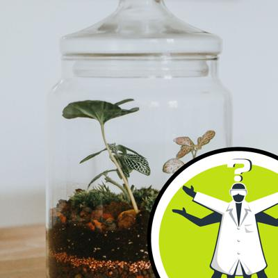 Cover art for Can frogs survive in a sealed terrarium?