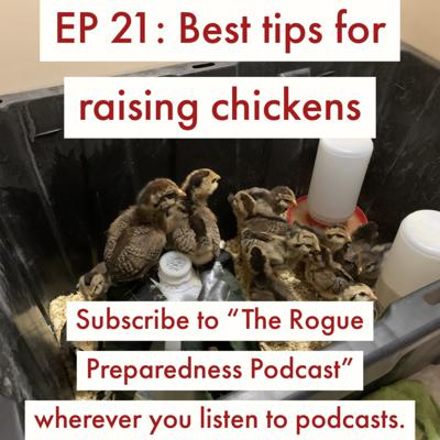 Cover art for Best Tips & Advice To Raise Chickens