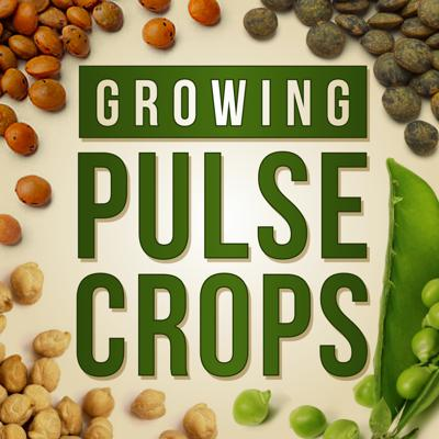 Join us as we follow pulse crop farmers through the growing season and dive into the research that's helping them through some of the challenges they face. We'll also talk to a number of other industry stakeholders along the way.   Demand for these nutrient-dense, high-protein foods continues to grow. There is also interest from farmers to include more pulses into diverse rotations for benefits like nitrogen fixation and soil health.   But the industry continues to face challenges, and we are eager to address these head on. So if you're a pulse grower or in any way interested in these important crops, hit subscribe and stay tuned for future episodes. We'll be back with plenty of information about challenges pulse farmers are facing throughout the U.S. and what solutions are working.  Brought to you by the Pulse Crops Working Group with support from the North Central IPM Center and USDA NIFA.