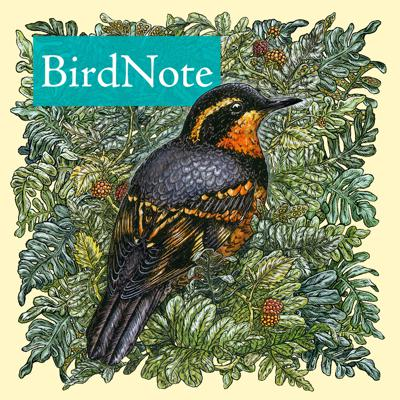 Escape the daily grind and immerse yourself in the natural world. Rich in imagery, sound, and information, BirdNote inspires you to notice the world around you. Join us for daily two-minute stories about birds, the environment, and more.