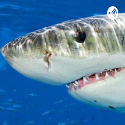 Be the Shark Recovery Podcast