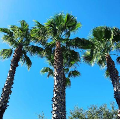 Between The Palm Trees