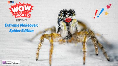 Extreme Makeover: Spider Edition (encore)