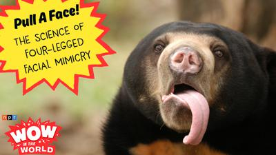 Cover art for Pull A Face! The Science Of Four-Legged Facial Mimicry (encore)