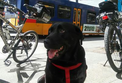 Cover art for #21 Meet Eclipse, the Dog Who Rides the Bus!