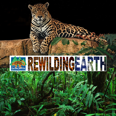 The goal of Rewilding Earth podcast is to highlight the work of the people involved in saving nature's building blocks, whether they be intact wilderness or key corridors and buffers surrounding wilderness, as well as people invested in protecting and reintroducing extirpated species to these areas. You'll hear from conservation biologists, activists, naturalists, organizers, artists, and authors as we interview key players in the fight to Rewild Planet Earth.