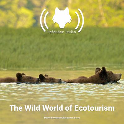 Cover art for The Wild World of Ecotourism