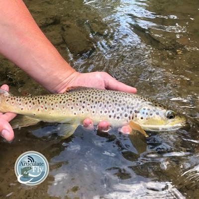Cover art for S2, Ep 110: Central PA Fishing Report with TCO Fly Shop