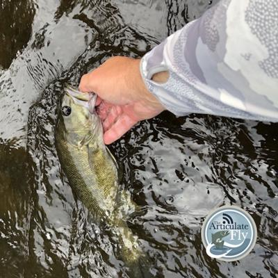 Cover art for S2, Ep 111: Western NC Fishing Report with Tuckaseegee Fly Shop