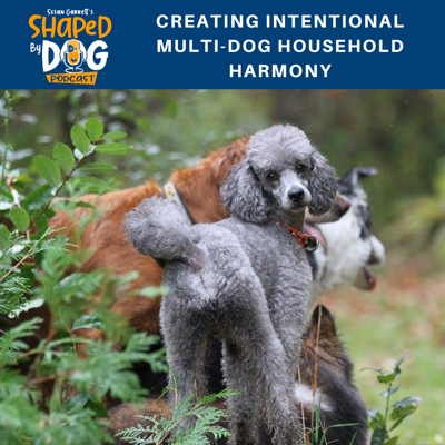 Cover art for Creating Intentional Multi-Dog Household Harmony
