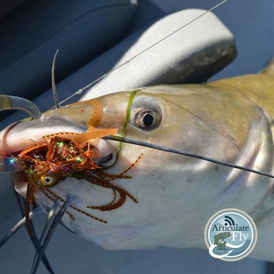Cover art for S2, Ep 113: Texas Hill Country Fishing Report with Upstream on the Fly