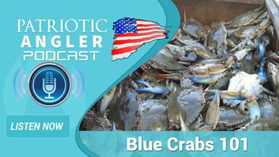 Cover art for Blue Crabs 101