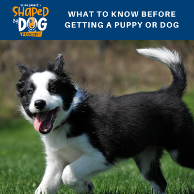 Cover art for What to Know Before Getting a Puppy or Dog