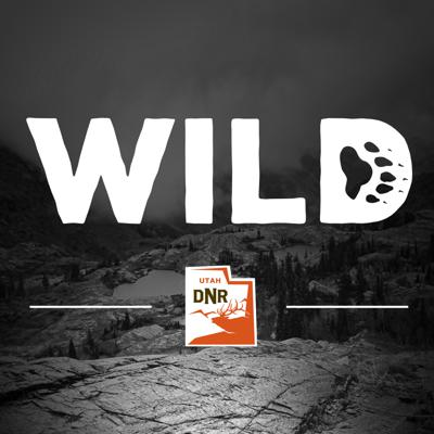 """Have you ever wondered how wildlife agencies catch and track ducks and geese? Are you curious about what happens inside a fish hatchery? """"Wild,"""" a new podcast produced by the Utah Division of Wildlife Resources, will answer these questions and provide insight into the work that Utah does to protect its wildlife.  A new episode will be launched the third Tuesday of each month and will feature an inside look at different projects and jobs within Utah's wildlife agency."""