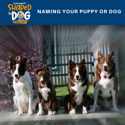 Cover art for Naming Your Puppy or Dog