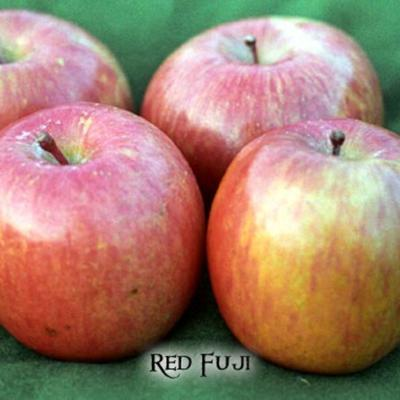 Cover art for All About Apples. Compost Do's and Dont's.