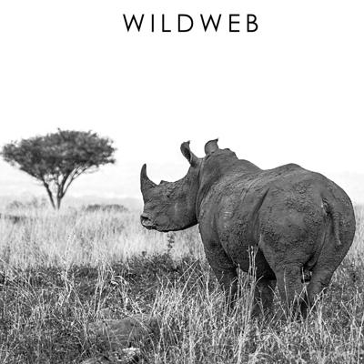 Cover art for Rhino Conservation & Manyoni Private Game Reserve with Dale Airton