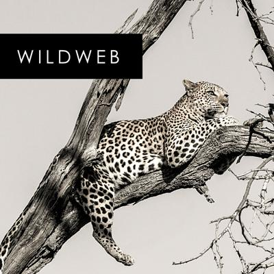 Cover art for Zambia and the South Luangwa national park with Jo Pope