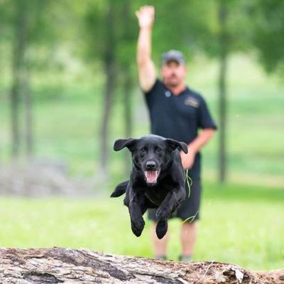 Cover art for Episode 70: Rody Best- Finding The Perfect Mix Of Work & Play With Your Sporting Dog